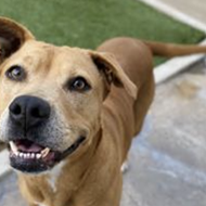 San Antonio Humane Society holding discount adoption promotion for large dogs this week