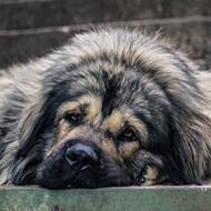 Texas Legislature passes bill setting basic standards of care for dogs restrained outside