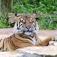 San Antonio Zoo hosting after-hours Pride Month event