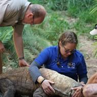 San Antonio Zoo's Dr. Rob L. Coke named finalist for 'Hero Veterinarian' award