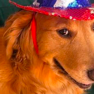 After vetoing animal cruelty bill, Texas Gov. Abbott tweeted a July 4 pic of his dog. It didn't go well.