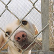 Bill Would Make It a Misdemeanor to Chain Your Dog in Texas