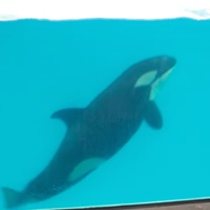 SeaWorld's Last Orca Calf Dies in San Antonio