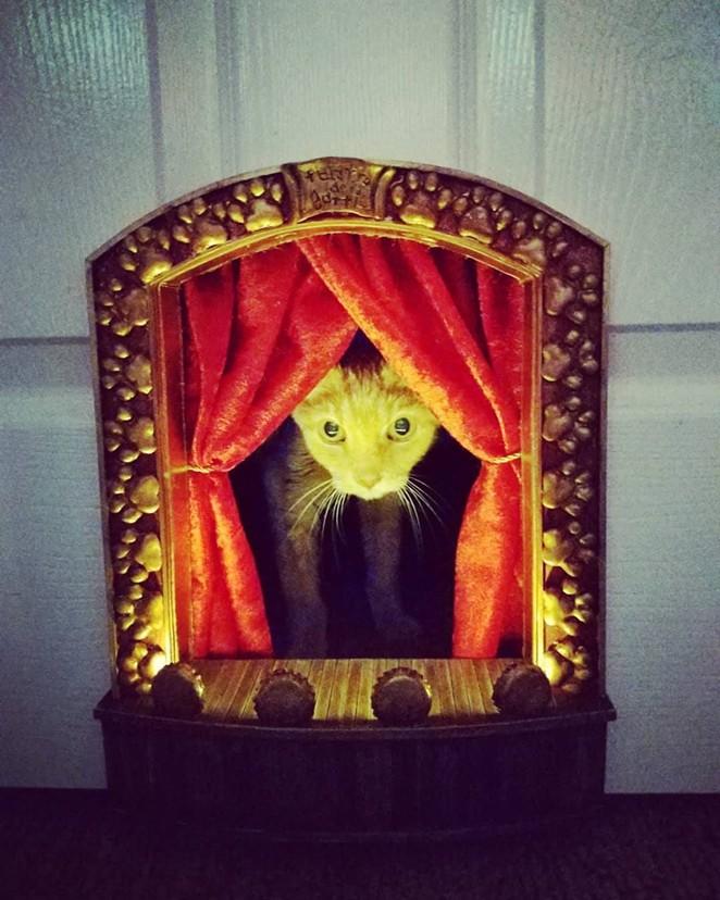 Ted makes his Teatro dei Gatti debut. - COURTESY OF SCOTT NEALE