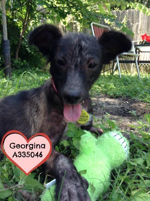 A335046 Georgina