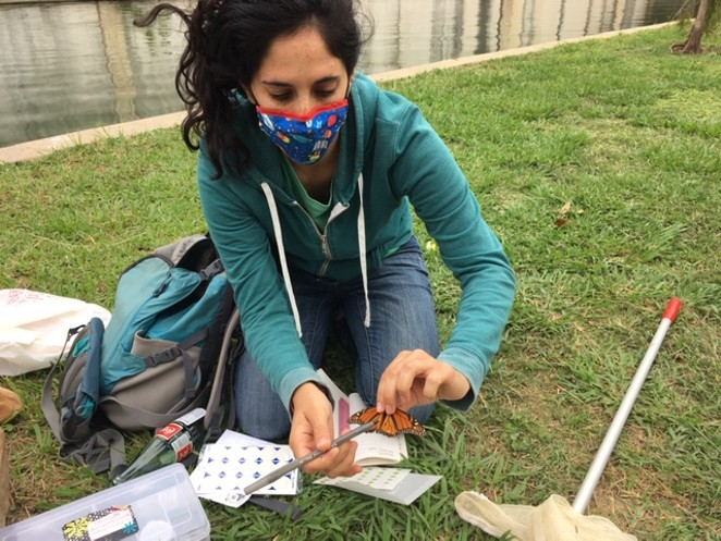 Grad student Rebecca Zerlin tags a monarch butterfly so its location can be tracked. - KATIE HENNESSEY
