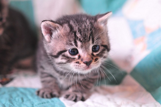 Give a little guy like this a good home for a reduced rate this weekend. - VIA FLICKR CREATIVE COMMONS
