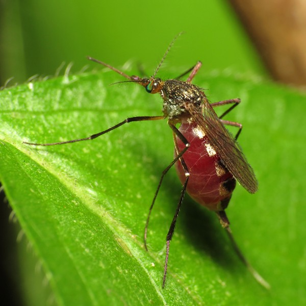 Bexar County now has three confirmed cases of the Zika virus. - KATJA SCHULZ/FLICKR CREATIVE COMMONS