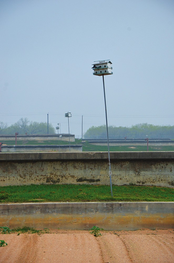 More than 500 purple martin houses help SAWS stay insect and insecticide free.