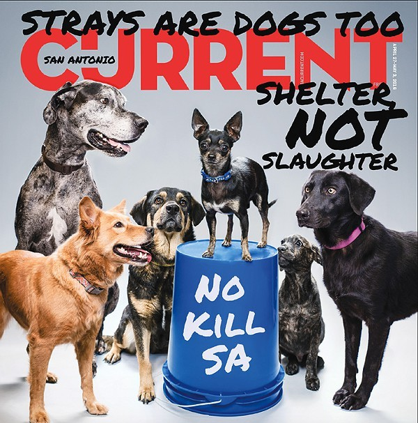 Some of the dogs featured on the Current's cover are still looking for homes. - JOSH HUSKIN/RICK FISHER