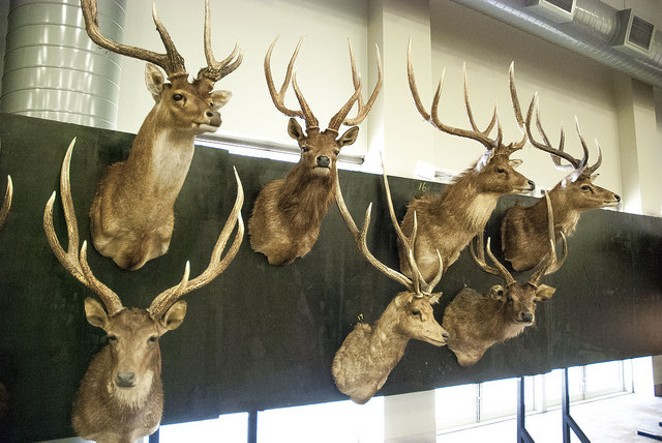 Dave/Deer Trophy, Flickr
