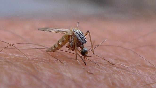 San Antonio has a hospitable environment for Zika virus. - FLICKR CREATIVE COMMONS