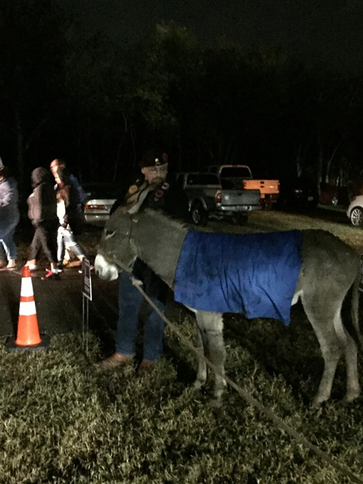 A sad, wet and blue donkey at the Bexar County Democrats' election-night watch party. - ALEX ZIELINSKI