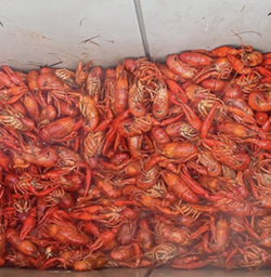 Texas Ski Ranchin New Braunfels will host a free outdoor event featuring axe throwing, wakeboarding, live music and — of course — crawfish. - INSTAGRAM / TEXASSKIRANCH