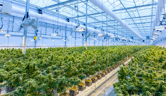 Marijuana plants grow inside a cultivation facility in Canada. - UNSPLASH / RICHARD T | THE CBD