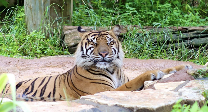 """The San Antonio Zoo will hold an all-ages LGTBQIA-friendly event dubbed """"Night Out At The Zoo"""" later this month. - INSTAGRAM / SANANTONIOZOO"""