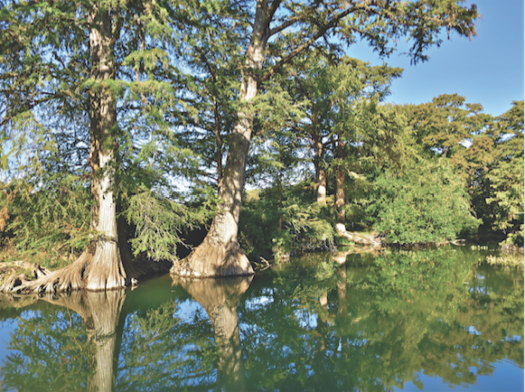 GUADALUPE RIVER STATE PARK, PHOTO BY JUSTIN MOORE