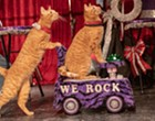 Josephine Theatre Offering Feline Fun with Return of the Amazing Acro-Cats
