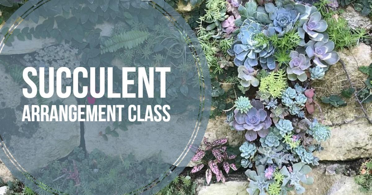 succulent_sabot.jpg