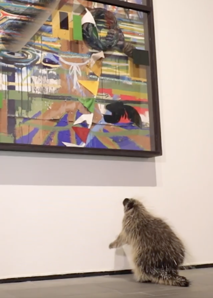 A porcupine closely inspects a painting. - INSTAGRAM / MCNAYART
