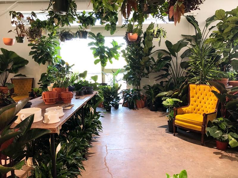 The lush interior of the Tillage Plants shop at 125 Lamar. - KARA JOHNSON