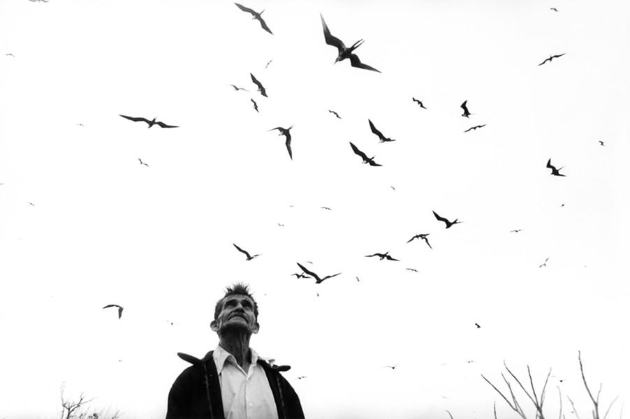 El señor de los pájaros, 1984