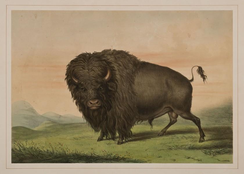 GEORGE CATLIN // BRISCOE WESTERN ART MUSEUM