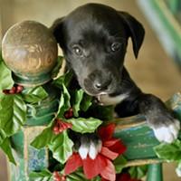 Neiman Marcus Holiday Adoption Event