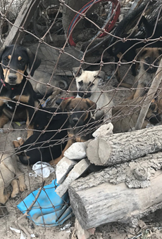 Dozens of Dogs Rescued From Poor Living Conditions at South Bexar County Home