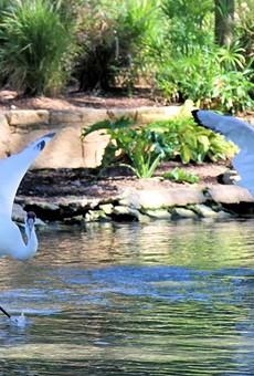 San Antonio Zoo Opens New Whooping Crane Habitat