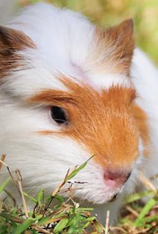 PETA Asks for Investigation of San Antonio-Area Pet Breeding Company Over Poor Inspections
