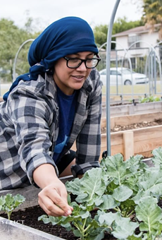 The Palo Alto College Community Garden has been thriving, yielding crops that have been donated to the SA Food Bank.