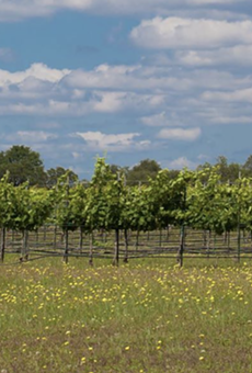 Texas Hill Country Nominated for 'Best Wine Region' in USA Today's 10Best Contest
