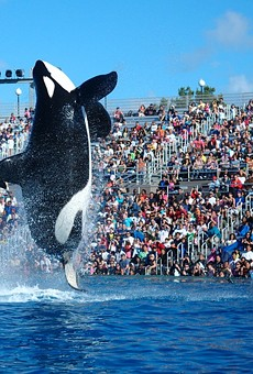SeaWorld San Diego is replacing its live orca show with another show involving orcas.