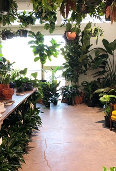 The lush interior of the Tillage Plants shop at 125 Lamar.