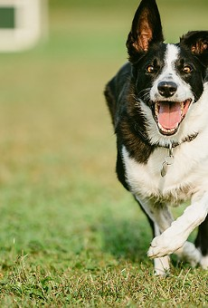 This dog is in need of a running buddy.