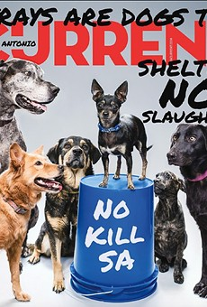 Some of the dogs featured on the Current's cover are still looking for homes.