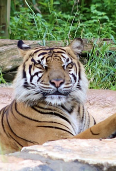 """The San Antonio Zoo will hold an all-ages LGTBQIA-friendly event dubbed """"Night Out At The Zoo"""" later this month."""
