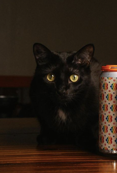 Künstler's new Puro Pride Pale Ale (and brewery cat, Kung Fu).