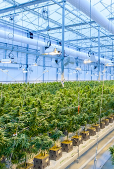 Marijuana plants grow inside a cultivation facility in Canada.