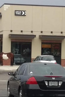Which One of Y'all Rode This Horse to Starbucks?