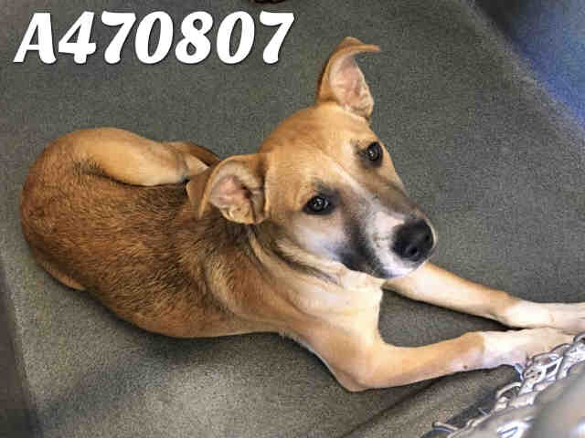 You will be Lucky to adopt this boy! - SAN ANTONIO ANIMAL CARE SERVICES