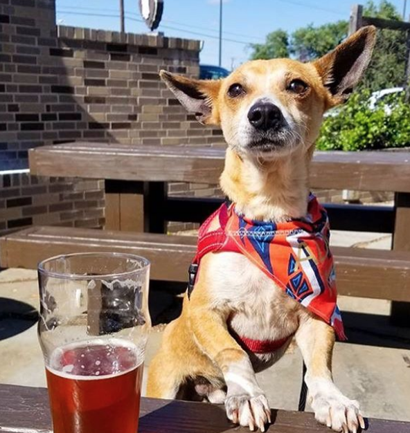 The Growler Exchange to Host Pizza, Beer and Dog Adoption