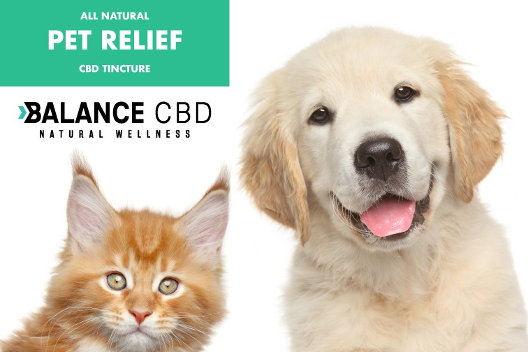 Choosing The Best CBD Oil For Dogs ...dogsnaturallymagazine.com