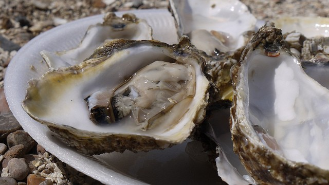 Raw oysters? Check. - FLICKR CREATIVE COMMONS