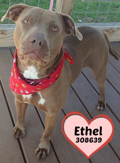 Ethel - I look so purdy in ravishing red - SA PETS ALIVE