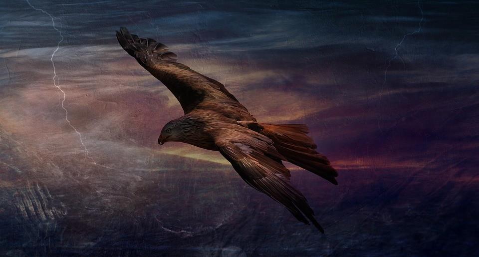 One free bird. - PUBLIC DOMAIN