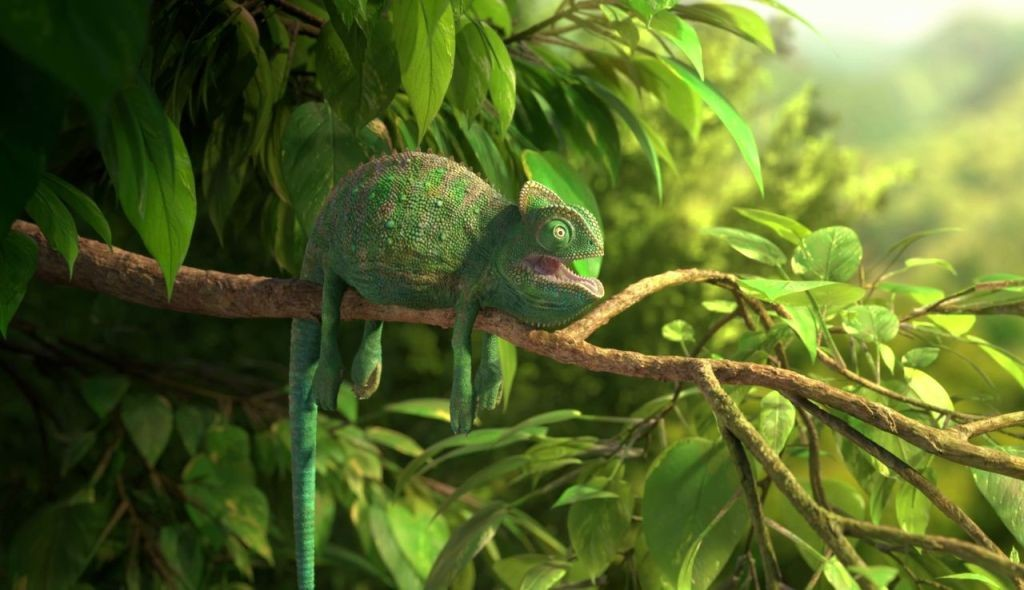 OUR WONDERFUL NATURE: THE COMMON CHAMELEON