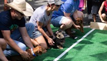 September Dachshund Races