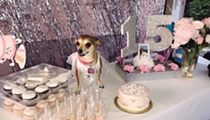 This Corpus Christi Dog Had a Quinceñera And We're Sad We Weren't Invited